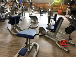 Dr. Wolff Back Circle (back equipment for targeted muscle building)